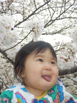 Sakura13_7